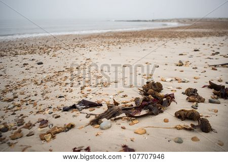 Debris on beach