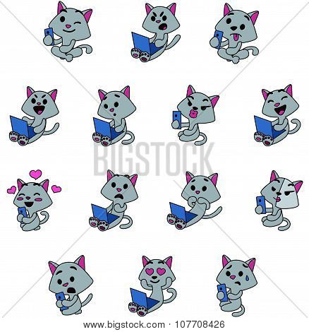 Grey cats social life