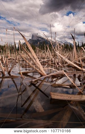 Mount Rundle and reeds