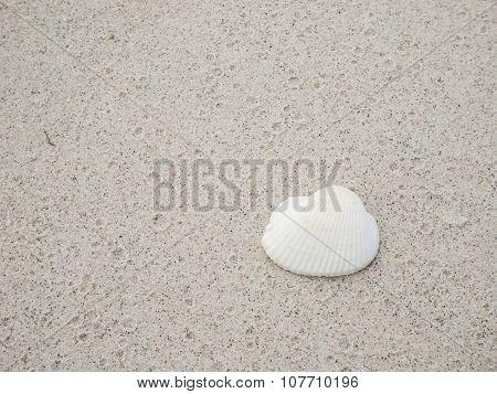 White Shell On Sand