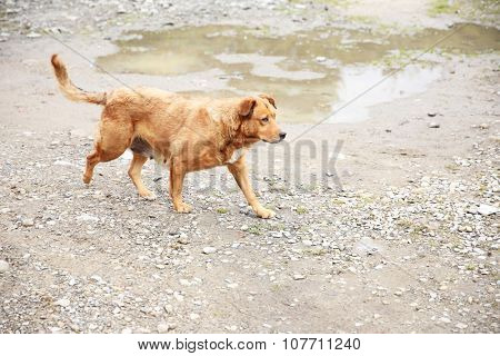 Stray dog, outdoors