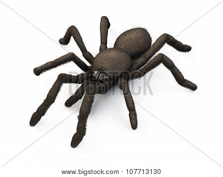 Spider Isolated On White Background. 3D.