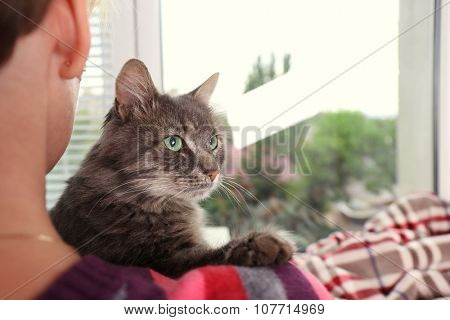 Woman in colourful pullover holds in hands beautiful grey cat near window