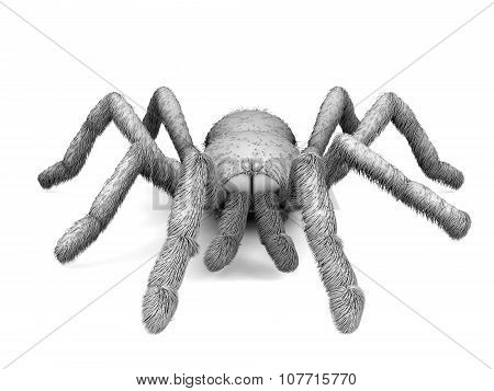 Black And White Spider On A White Background. 3D.