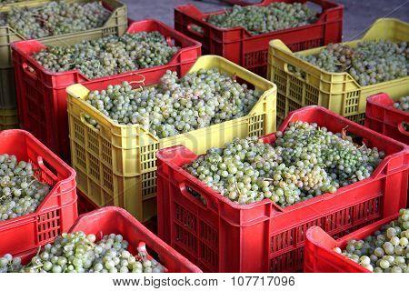 Falanghina Wine