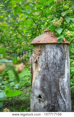 Ancient Beehive In The Foliage