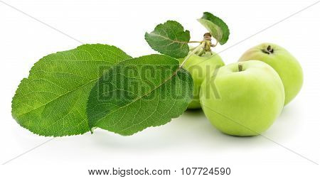 Green Apples With Leaves.