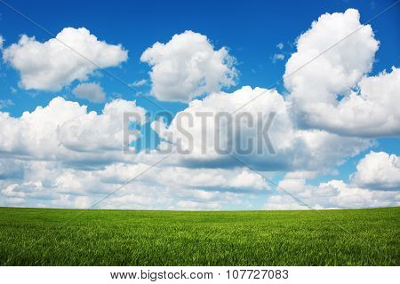 Wheat field. Fresh green grass and beautiful clouds.