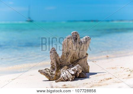 Snag on the tropical beach