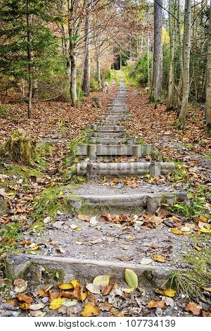 Stairs Fitness Trail In Forest