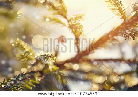 Indistinct Background With Fir-tree Branches