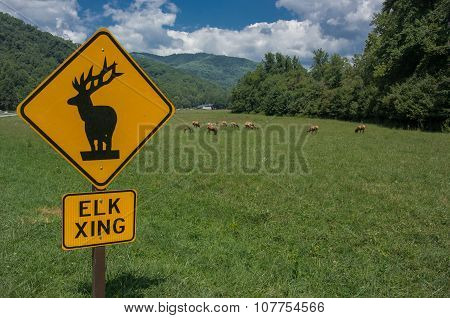 Elk Crossing Sign Horizontal With Elk In Background