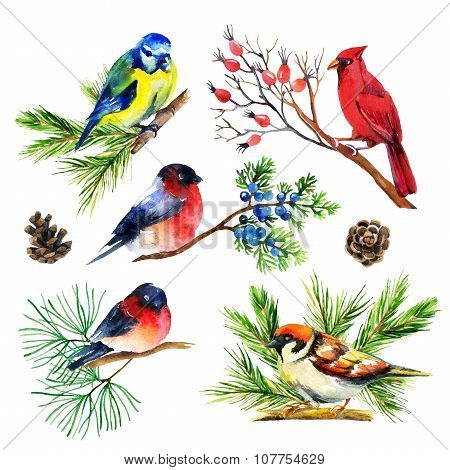 Watercolor Bullfinch, Titmouse, Cardinal And Sparrow On Branches