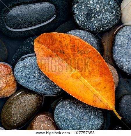Autumn ,fall And Zen Like Concepts Orange Leave Fall On River Stone .