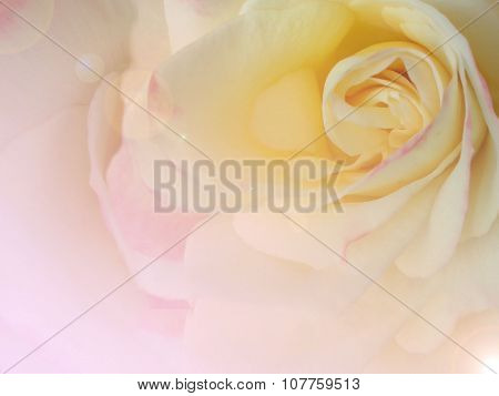 Rose With Pastel Tone