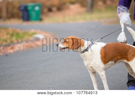 a dog on a leash walking down a street with it's owner holding a dog waste bag