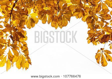 Autumn yellow leaves on a white background