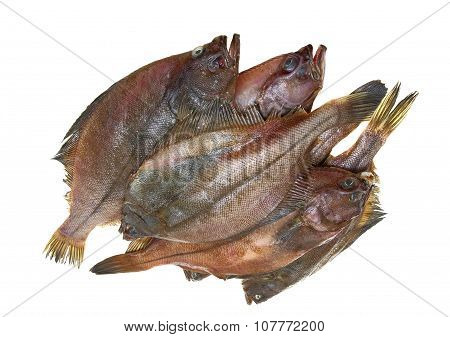 Four Fresh Flounder Fishes