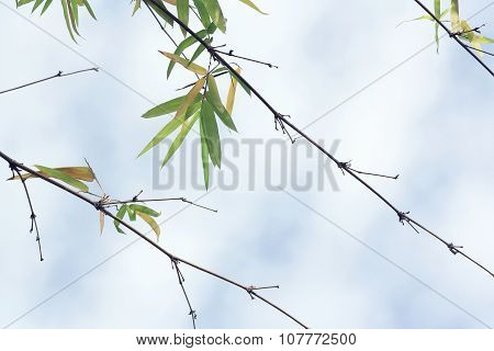 branch of bamboo