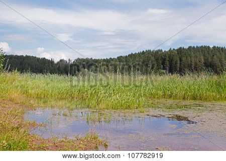 Pond In A Forest
