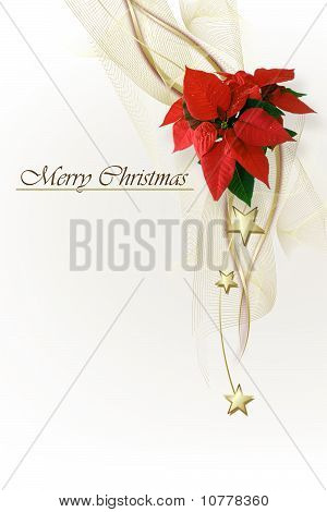 Red Christmas Background With  Poinsettia