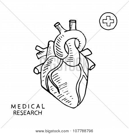 Human heart. Vector illustration.