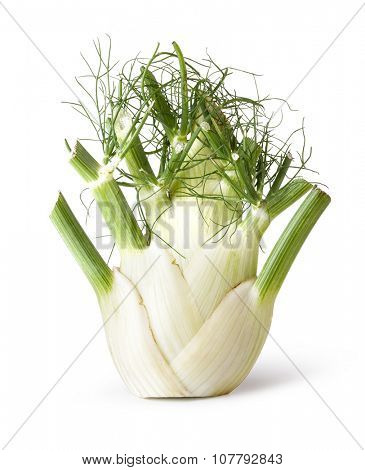 fennel root isolated on white background