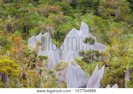 Limestone pinnacles at gunung mulu national park