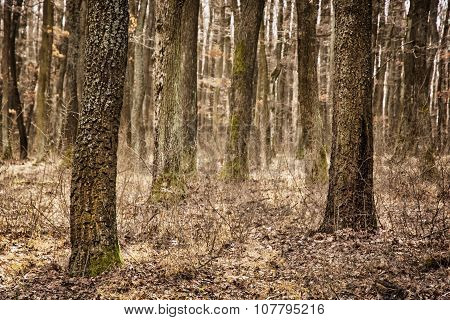 Autumn Deciduous Forest, Brown Filter, Seasonal Nature