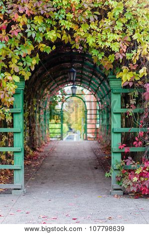 Pergola With Colorful Climbing Plants, Autumn Scene