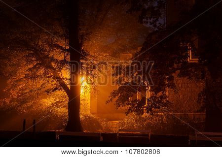 Magic Glowing Light Castle In Mysterious Mist Behind Tree
