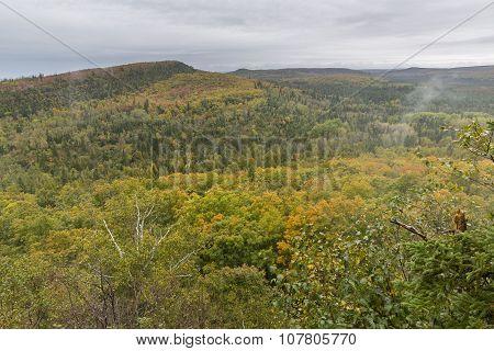Autumn Forest Hills