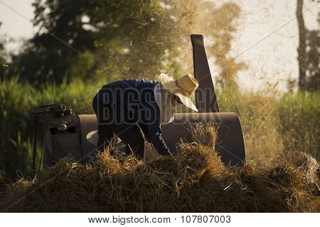 Farmer threshing rice