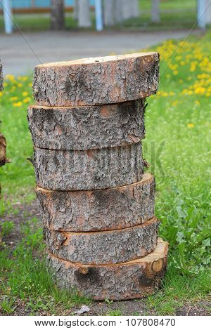 Sawn tree trunk