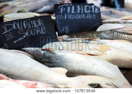 BELEM DO PARA, BRAZIL - CIRCA NOVEMBER 2015: Fresh fish inside the famous Ver Peso Market in Belem do Para, Brazil