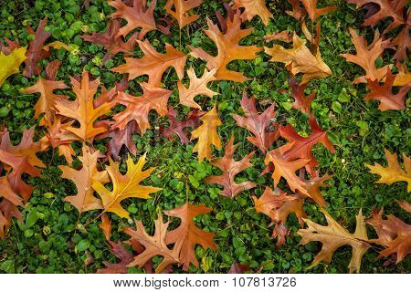 Autumn Leaf texture pattern background