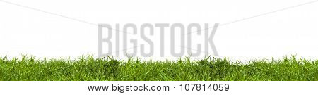 Green grass on white with clipping path