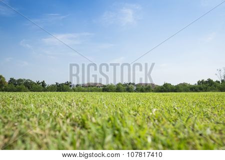 Greensward field background