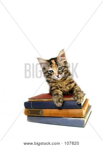 Kitten And Books