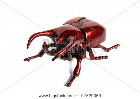 Horn Beetle Isolated