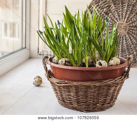 Easter Window Decoration With Growing Muscari And Fritillaria In A Baske