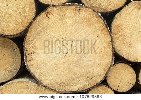 Log Section