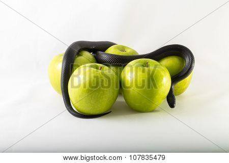 Sin snake apple