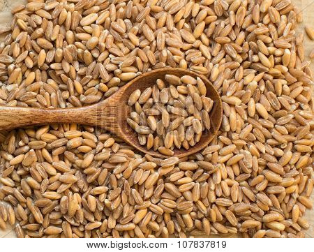 Whole Unpolished Spelt  With A Spoon
