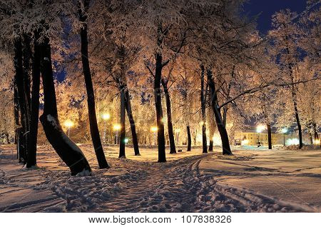 The Winter Evening In The City Park