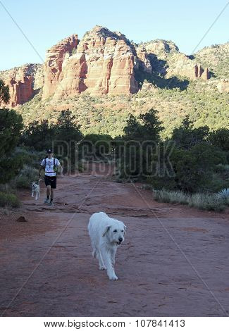 A Woman Runs With Her Dogs On Bell Rock Trail