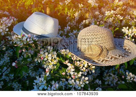 Hats On A Flowering Branch