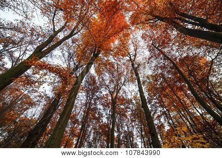 High red trees
