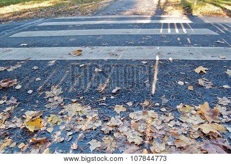 Empty pedestrian crossing