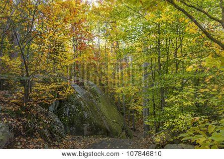 Large Precambrian Rock Next To A Trail - Ontario, Canada